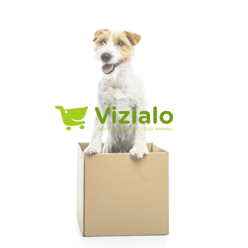 Pet Store E-Commerce: Vizialo
